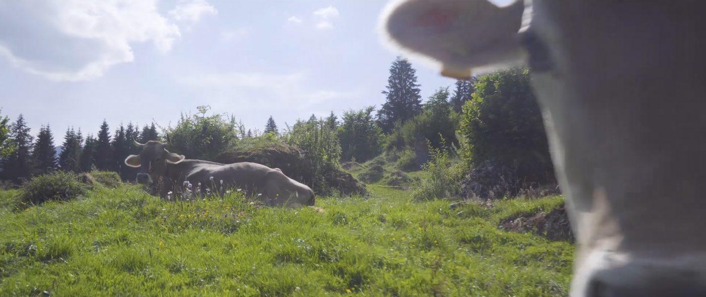 Unsere Kühe leben naturbelassen. Allgäuer Käse kaufen